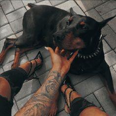 Doberman Pinscher Dog, Doberman Puppies, Rottweiler Dog, Pitbull, Pet Dogs, Dogs And Puppies, Corgi Puppies, Weiner Dogs, Doggies