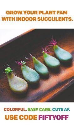 Types Of Succulents, Growing Succulents, Cacti And Succulents, Planting Succulents, Planting Flowers, Succulent Gardening, Succulent Care, Container Gardening, Garden Plants