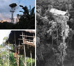 """""""Real"""" tree houses. (I could never climb that ladder without having a full-on panic attack, but really cool to see.) In the jungles of the Brazza River Basin in the Indonesian province of Papua the local tribes have slowly built their way up into the trees to escape pests and one another. Their residences now reach dizzying heights of over 100 feet. """"tree dwellers"""""""