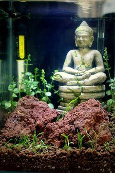Montagem de buddha