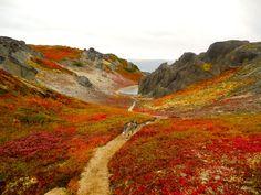 Autumn has already hit Kesugi Ridge in Alaska's Denali State Park. Photo: Aubrey Morrison