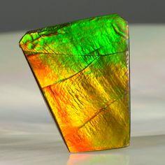 Top quality specimen of Ammolite   beautiful piece..