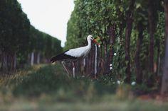 Tendances 2018 : Slow Wine Travel et ses destinations pointues.