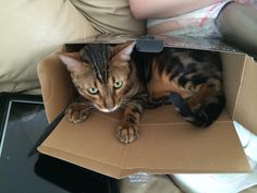 Max loves his boxes