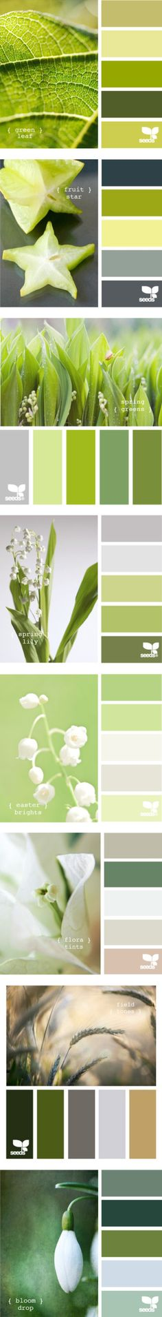 """""""Green color palet"""" by sedab ❤ liked on Polyvore"""