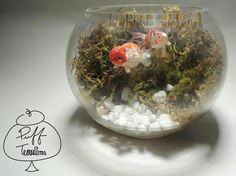 Gold Fish Terrarium Bowl Find us on Facebook :: puff terrariums #puff #terrarium #home #work #sky #decor #decoration #plant #cactus #garden #cat #puppy #wedding #centerpiece #green #moss #gift #DIY #crafts #art #cute #jar #happy #bottle #yolo #lol #hkig