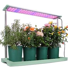 """Amazon has the Moistenland 48W LED Grow Light Panel, Height Adjustable, Automatic Timer, Ideal for Indoor Potted Plants, Greenhouse, Hydroponic, Grow Tent, Green marked down from $89.99 to $53.99. That is $36 off retail price! TO GET THIS DEAL: GO HERE to go to the product page and click on """"Add to Cart"""" 40F79MPFENTER CODE…"""
