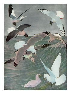 Image result for sea birds - vintage