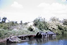 BW197-2-26-4-1 derelict vessels on the Wendover Arm of the Grand Union Canal including a wooden horseboat and a wooden tug Date nd [1950s]