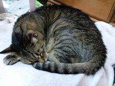 今日の猫(2014/12/10) | Flickr - Photo Sharing!