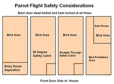 Essential Safety Measures for Clipped and Flighted Parrots