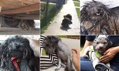 Amazing transformation of dog abandoned in the heart of LA's gangland  #animalhearted