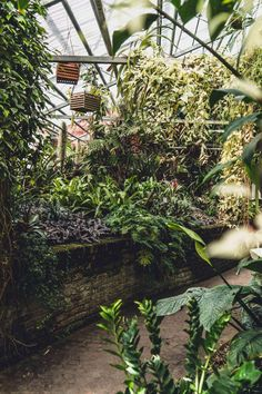 Wondering How to visit Hortus Botanicus Lovaniensis? Here's your guide on visiting Leuven's Botanical Garden, the oldest garden of its kind in Belgium, Europe #gardens #botanicalgardens