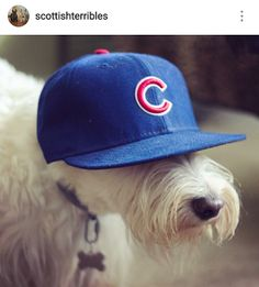 Scottish Terriers of Instagram