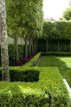 Layering with pleached Titoiki