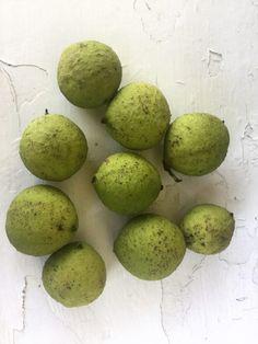 How to make Homemade Black Walnut tincture | Herbal Medicine | DIY | Home Remedies | Herbs