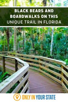 For many outdoor enthusiasts, the best part about hiking through nature isn't the exercise, but nature itself. !The Black Bear Wilderness Trail in Sanford, Florida is a loop trail through the Black Bear Wilderness Area that takes hikers along boardwalks over marshes and through the forests. Who knows, you may just spot a black bear along the way! Best Bucket List, Wilderness Trail, Hidden Beach, Swimming Holes, Sunshine State, Black Bear, Natural Wonders, Garden Bridge, Travel Destinations