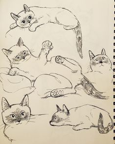 bev johnson — I missed drawing this little marshmallow Animal Sketches, Animal Drawings, Cat Drawing, Drawing Sketches, Cat Sketch, Cat Anatomy, Arte Sketchbook, Cat Art, Art Tutorials