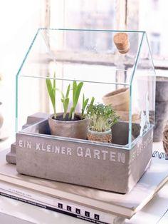 Dieses Mini-Gewächshaus ist genau das Richtige für alle Hobbygärtner, die es nicht mehr abwarten können, bis es endlich wieder warm draußen wird.