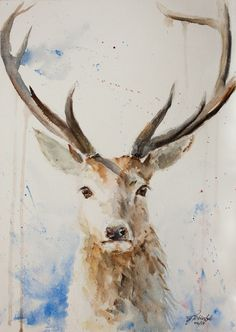 Stag – Watercolours Directly from the artist