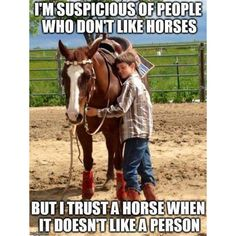 - Horses Funny - Funny Horse Meme - - The post appeared first on Gag Dad. Funny Horse Memes, Funny Horses, Cute Horses, Beautiful Horses, Beautiful Cats, Rodeo Quotes, Equine Quotes, My Horse, Horse Love