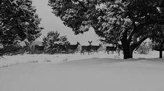 wallpaper-desktop-laptop-mac-macbook-mj28-snow-deer-winter-nature-animals-wallpaper