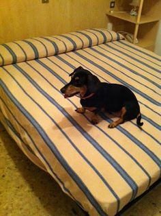 Dog Trip: Dove dormire con cane a Bibione. Hotel Playa Dogs, Animals, Beach Hotels, Tourism, Italy, Animales, Animaux, Doggies, Animais