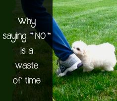 Why Saying 'NO' is a Waste of Time | Macaroni Kid
