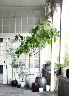 Bloesem living | Tine k home accessories