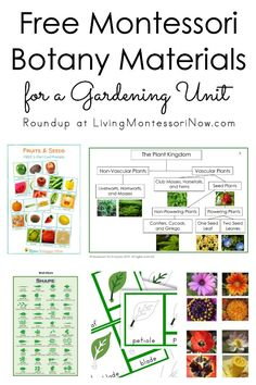 Roundup of free botany materials for homeschools and classrooms; free plant printables for a variety of ages - Living Montessori Now #Montessori #homeschool #preschool #kindergarten #gardening #botany Montessori Science, Montessori Homeschool, Montessori Elementary, Montessori Classroom, Montessori Toddler, Preschool Kindergarten, Home School Preschool, Online Homeschooling, School Play