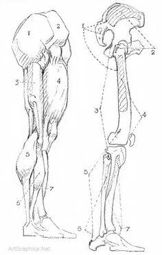 george bridgman constructive anatomy - Google Search