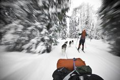 Husky Safari in Lapland, Finland