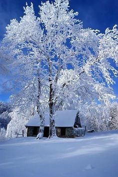 The beauty of winter. Bright blue winter sky reflecting off of bright white snow Winter Szenen, Winter Love, Winter Magic, Winter Christmas, Winter White, Winter Trees, Snowy Trees, Beautiful Places, Beautiful Pictures