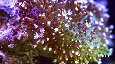 Hypnotic, dynamic, in danger: Coral reefs like you've never seen them before http://grist.org/living/hypnotic-dynamic-in-danger-coral-reefs-like-youve-never-seen-them-before/?utm_campaign=crowdfire&utm_content=crowdfire&utm_medium=social&utm_source=pinterest