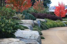 Robert Boyle Landscaping - Boulder Retaining Wall with Shrubs, Grasses & Perennials. Low maintenance & drought tolerant.