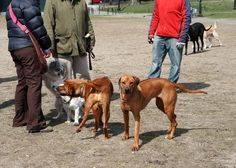 Dog Park Guidelines You Should Know | Animal Bliss