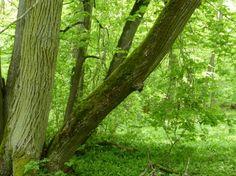 Kinnekulle - forest, grass, nature, trees