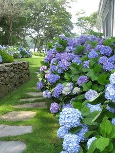Hydrangea Lines garden paths Hydrangea Landscaping, Hydrangea Garden, Blue Hydrangea, Backyard Landscaping, Landscaping Ideas, Backyard Ideas, Garden Ideas, Beautiful Gardens, Beautiful Flowers