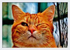 Quadro Decorativo Poster com Moldura e Vidro Pet Gato Piscando 33x24cm - Decore Pronto