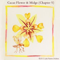 Guess what pollinates a cacao flower! It's not a bee... or a butterfly... or a hummingbird!  - Itzel