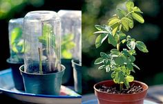 Du kan formere dine roser ved at lave stiklinger. Det kræver tålmodighed, men til gengæld kan du spare penge. Læs her, hvad du skal bruge. Green Garden, Summer Garden, Home And Garden, Outdoor Plants, Outdoor Gardens, Outdoor Decor, Farm Life, Garden Inspiration, Bird Feeders