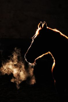 Beautiful silhouette!  Horse head against billowing campfire
