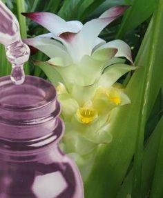 Plantar, Flowers, Gardening, Spices, Garden, Lasagna, Chicken, Flowering Plants, Exotic Flowers