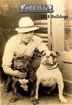 IOEBA 1918 Bulldogs