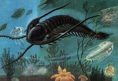 Trilobites, Articles on fossils, MineralTown.com