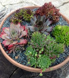 Container of mixed succulents.