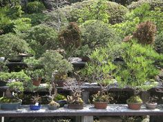 The many faces - and sizes - of bonsai!