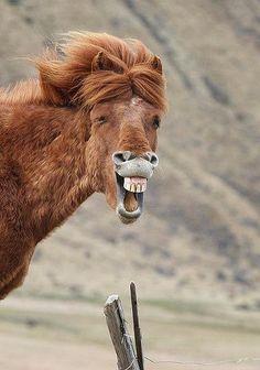 43 Animais mais felizes do mundo que vão te fazer sorrir …