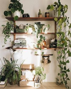 GREEN GOALS Such a unique combination of plants and possessions … - Dekoration Ideen 2019 Indoor Gardens, Sweet Home, Decor, Aesthetic Rooms, Room With Plants, Wooden Rack, Apartment Decor, Home Decor, House Plants Decor