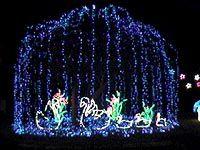 Swan Lake Fantasy of Lights. Sumter, SC